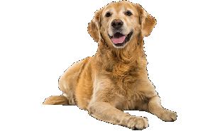 Dog-Teste-CEV